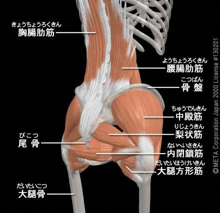 腰の筋肉②