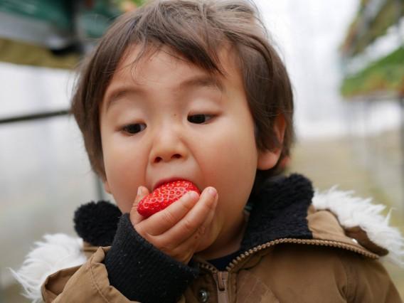 プチ旅行におすすめです(*´з`)久喜市JA南彩菖蒲グリーンセンターで「いちご狩り」