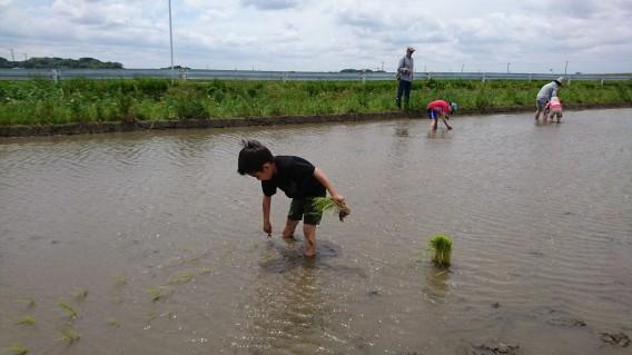 未来につなげる「耕育教室」で子供たちと田植え体験してきました
