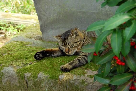 cat-546450_640